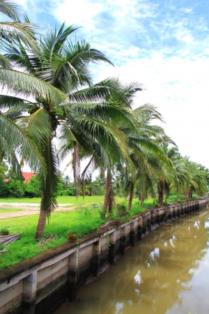 Coconut tree nearby the canal photo