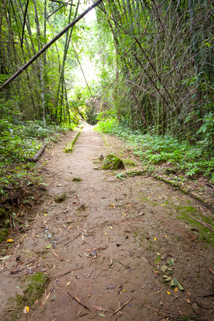 cheated: Green pathway in the forest  Stock Photo
