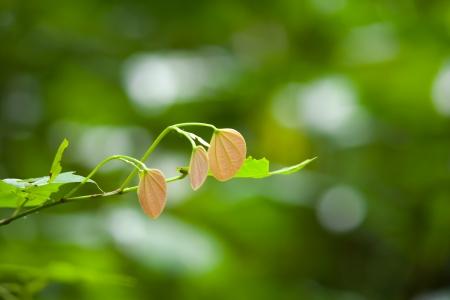 groen behang: Groen behang van natuurlijke bladeren