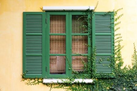 Green wood window with climbling tree on the wall photo