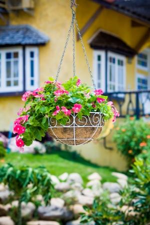 ペチュニアのピンクの花の掛かるバスケット