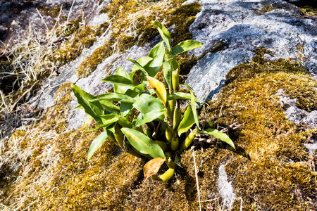 Orchid tree on the humit rock in the forest , Chaingmai, Thailand Stock Photo - 25074855