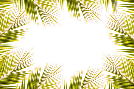 Coconut leaf fram on white photo