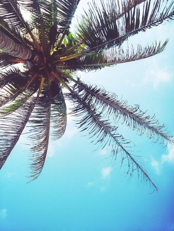 Coconut tree beside the beach in summer