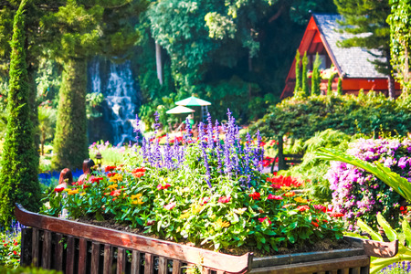 Beautiful flower pot in garden Chaingmai province, Thailand photo