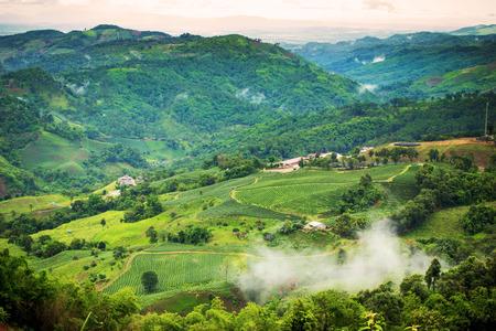 タイ チェンライ県における山の紅茶プランテーションの自然の風景 写真素材
