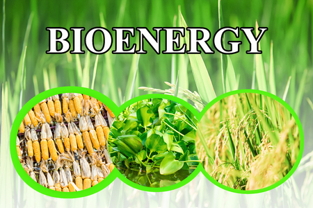 bioenergy: Bioenergy wording for background