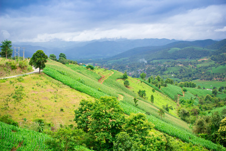 Natural landscape view of corn field and rice field over the mountain in Chiangmai, Thailand photo