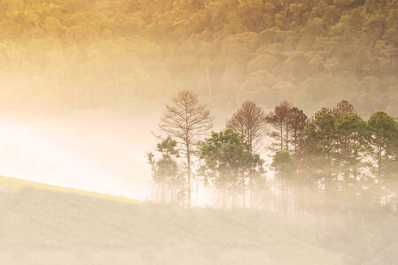 Abstract blurry and soft background of misty forest in morning photo