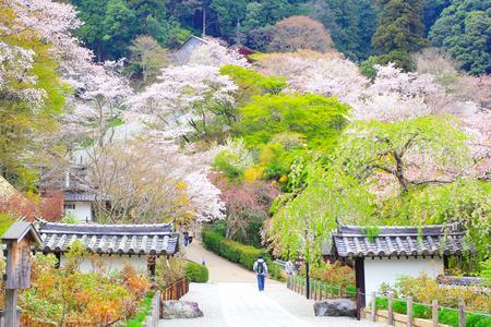 nara: NARA, JAPAN - April 13: Spring spot in Nara at the ancient temple,
