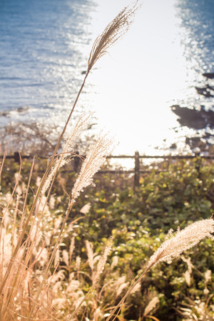 viewpoint: Grass flowers and sea background on viewpoint at Japan sea Stock Photo