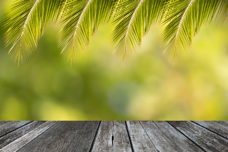 Tropical coconut leaf frame for summer background Stock Photo