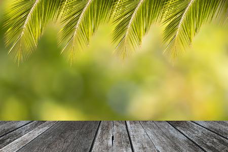 Tropical coconut leaf frame for summer background Stok Fotoğraf