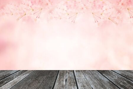 cherry wood: Abstract pink cherry blossom flower background with wood plank