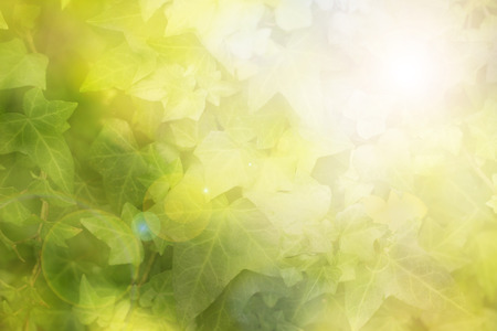 ivy: Abstract blur natural green ivy background Stock Photo