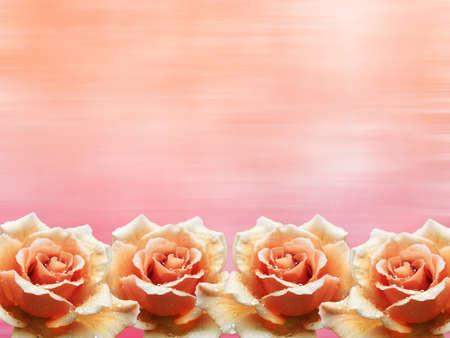 rosas naranjas: Rosas de color naranja marco de flores con el fondo rosado