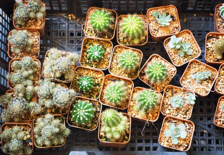 types of cactus: Various types pf little cactus in basket selling in market