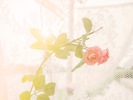 ligh: Blur and soft orange rose with soft ligh a sweet background Stock Photo
