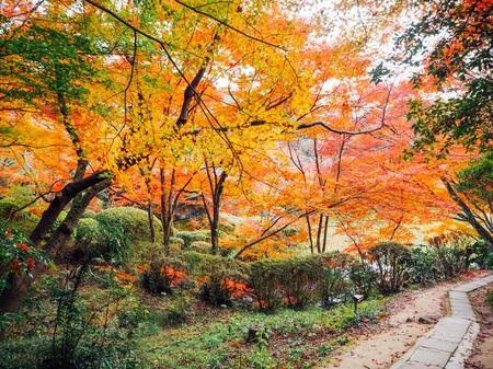 saga: Blur Abstract Autumn background in Mifuneyama Rakuen Garden, Saga, Japan Stock Photo
