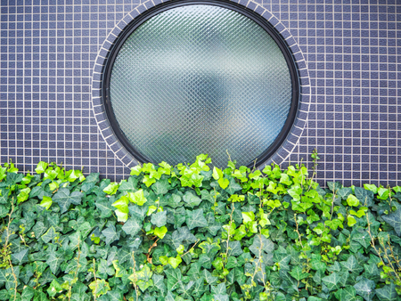 ivy wall: Ivy wall on the gray brick wall and round window Stock Photo