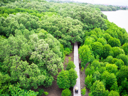 rayong: Topview of Green mangrove forest in Rayong province, Thailand