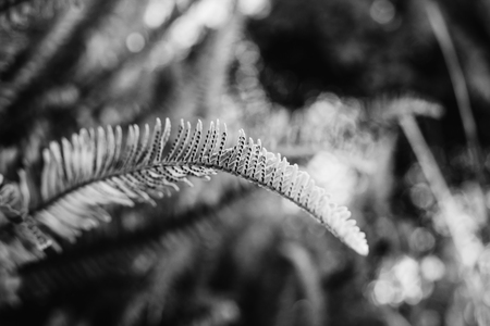Fern in forest in Black and white