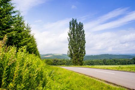 北海道、美瑛の自然のシーンでケンとメリーのポプラの木