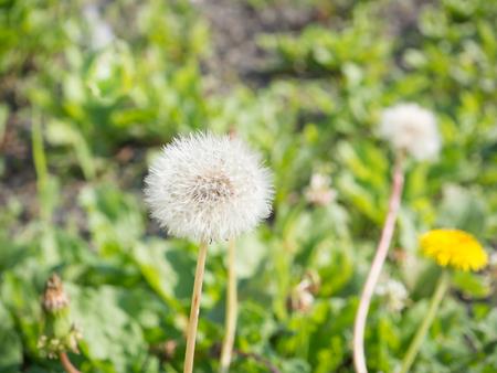 Soft and blur grass flower