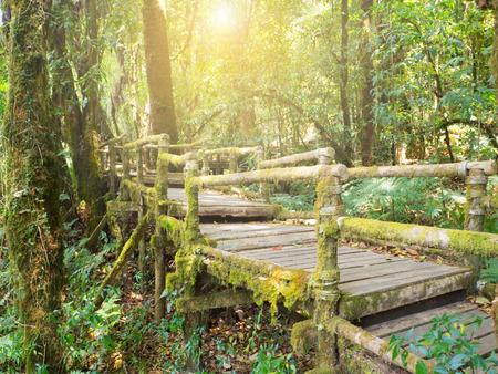 タイの湿度の高い森林に構えで光と緑