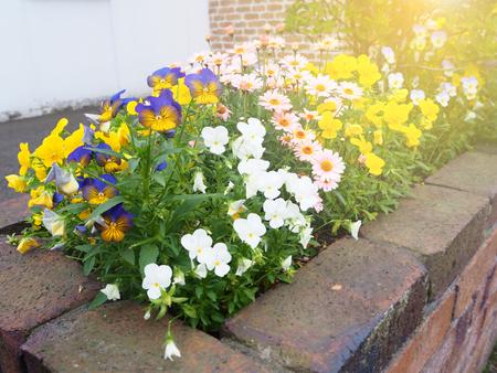 팬지 꽃 냄비 가정 장식의 다채로운 스톡 콘텐츠