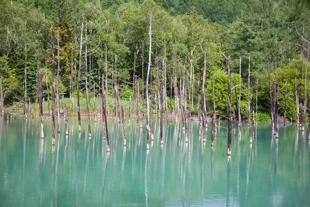 Natural landscape scene of Biei blue pond in Hokkaido, Japan Stok Fotoğraf - 120641323