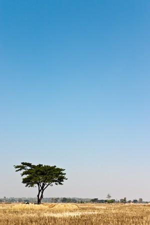 lonely tree Stock Photo - 6994755