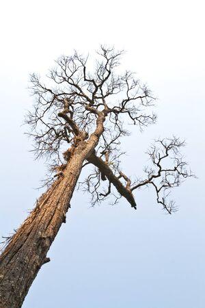 dried tree Stock Photo - 6994671