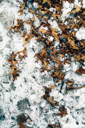 leaves on the wet snow. Early Spring. toned image