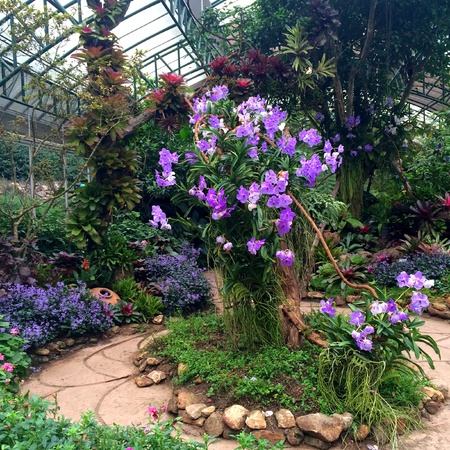 orchid house: Focusing on a big tree with purple orchid in the green house garden with blur background Stock Photo