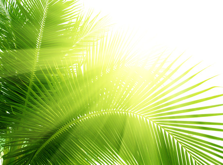 Palm leaves isolated green Banco de Imagens