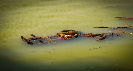 Immersion of Durga idol in Ganga river