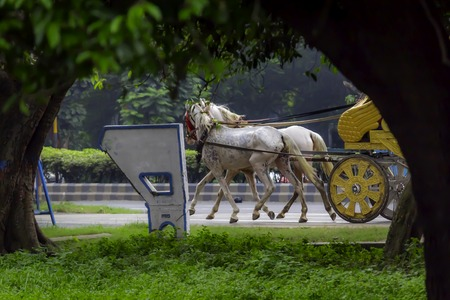 Portrait of a traditional decorated dress horse cart also known as Tanga or Rickshaw or chariot in ( Kolkata, West Bengal, India, Asia) used for carrying tourists around the town city. Holiday concept