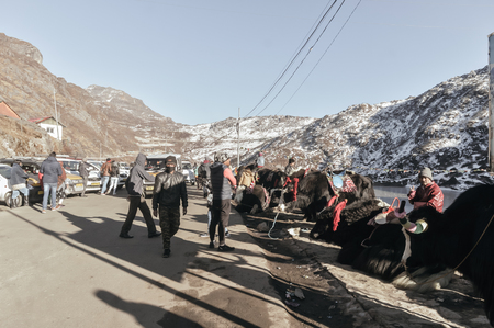 Gangtok, East Sikkim, India, 1 January, 2019: Yak standing near Tsomgo (Changu) Lake. It is a sacred natural glacial lake on top of himalayan mountain near India China border of Nathula Pass. 新聞圖片