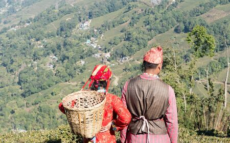 Beautiful young couple in love. Indian tea puckers, romantic couple woman and man caught in summer time in a mountain terrace tea garden on Labor Day - North American Holiday. Assam Darjeeling India. Stok Fotoğraf