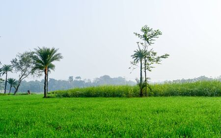 Green fields and trees in a scenic agricultural landscape in rural Bengal, North East India. A typical natural scenery with an agricultural field in the rural India depicting simple rural life.