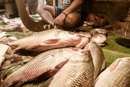 Popular Rohu, Rui, Roho Labeo fish display for sell in a Street food stall in a roadside local bazaar market. Kolkata West Bengal, India