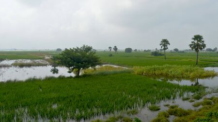Lush green horizon of agriculture field of a small Indian village in warm and moist air during southwest torrential Monsoon Rainfall season. Tropical climate countryside harvest. India South Asia Pac
