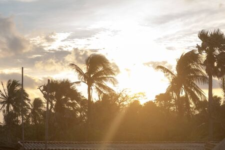 Silhouette coconut palm tree by dark back Lit skylight sun sunlight sunset. Dramatic atmospheric mood background. Dusk to night time lapse. Tropical Island Beach climate. Background nature scene.