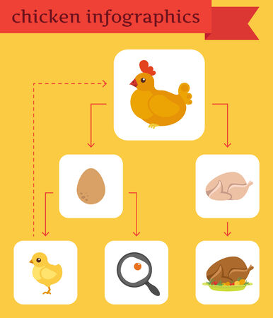 Chicken infographics in flat style.Vector illustration Vector