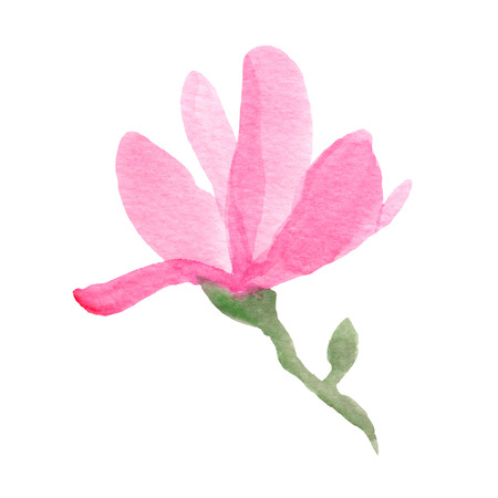 Watercolor hand drawn magnolia.Vector illustration Ilustrace
