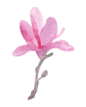 Watercolor hand drawn magnolia.Vector illustration Vector