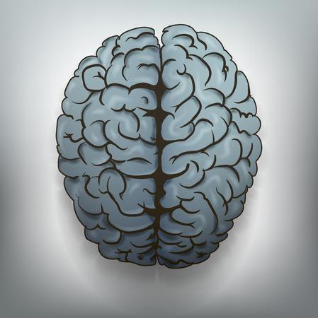 stimulated: Human brain  Vector