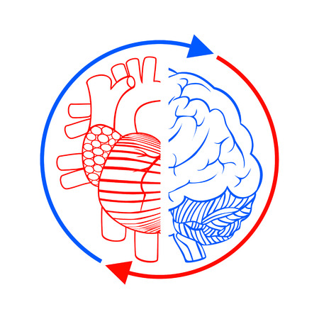cooperativismo: Comunicación del cerebro y el corazón. Firme mostrar la conexión, el equilibrio entre el corazón y el cerebro humano. ilustración