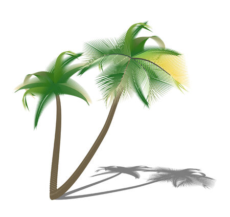 date palm: Isolated palm trees with shade. illustration  Stock Photo